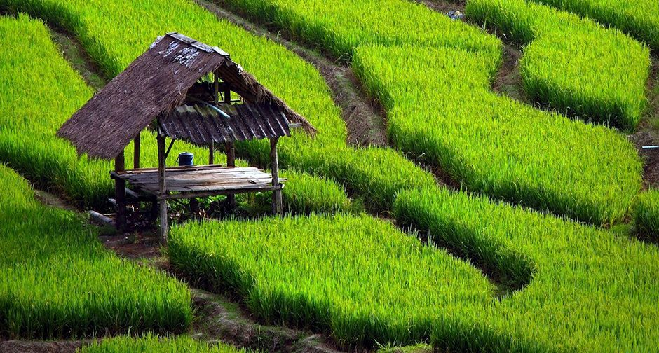 Paddy Field For Sale In Kandy