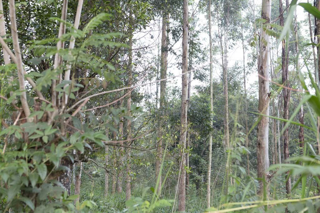 Lands for sale in Welimada area